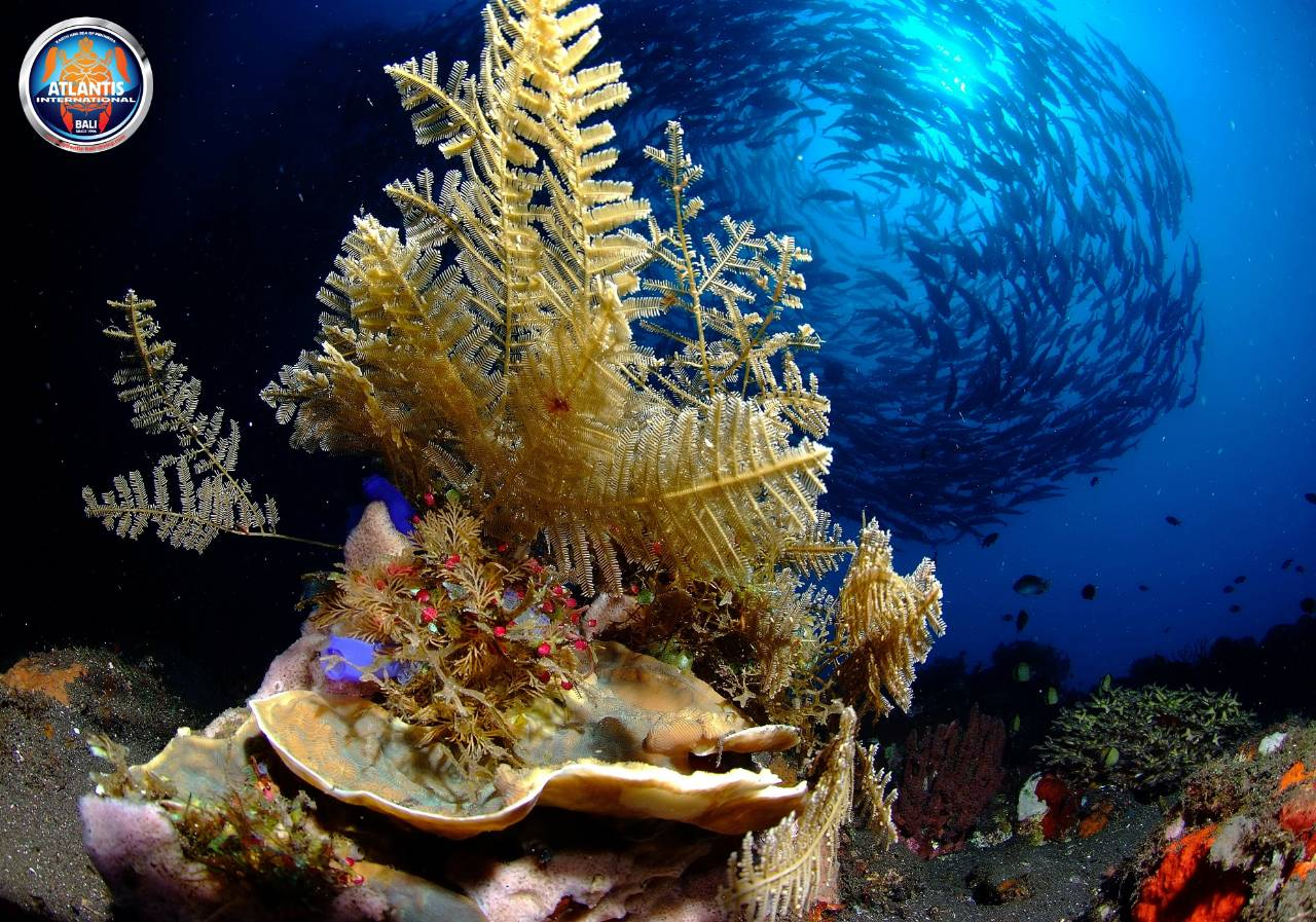 Discover Bali and its underwater life | Atlantis Bali Diving