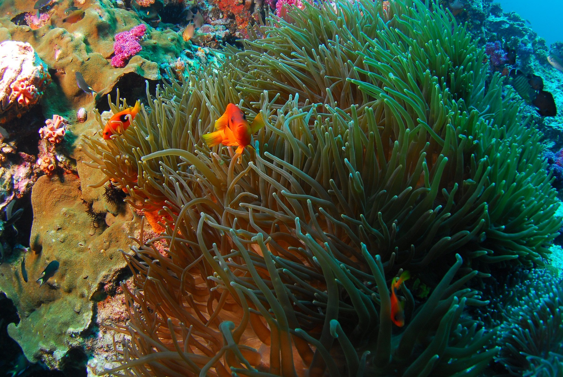 Rules And Guidelines For Diving | Atlantis Bali Diving