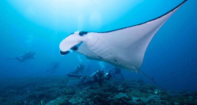 Manta Point | Diving Nusa Penida | Atlantis Bali Diving