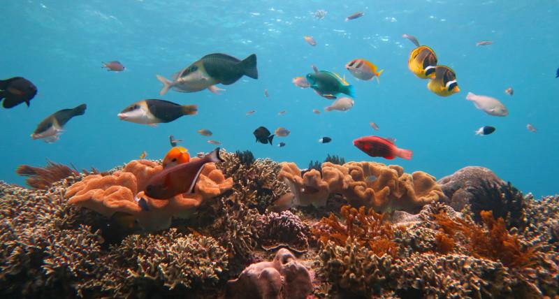 Snorkeling Padang Bay | Atlantis Bali Diving