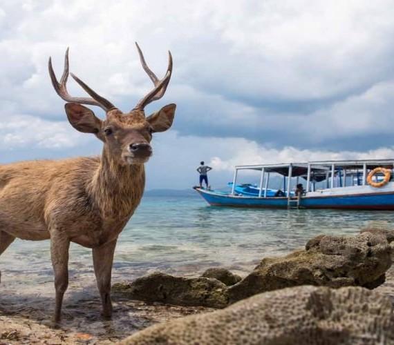 Diving Menjangan | Atlantis Bali Diving