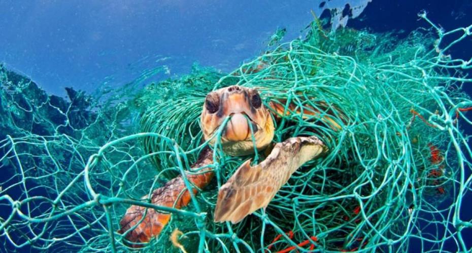 Marine Awareness | Atlantis Bali Diving