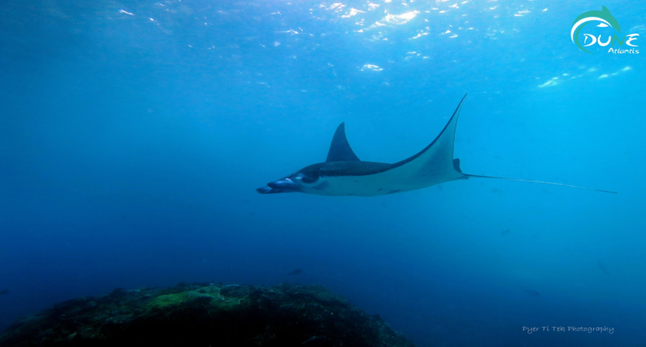 The Incredible And Majestic Manta Rays