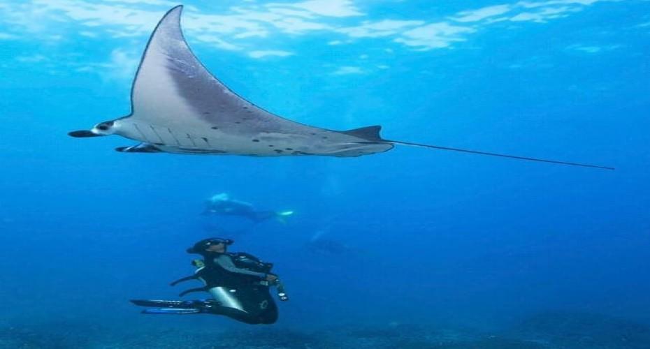 The Treasures Of Diving In Nusa Penida