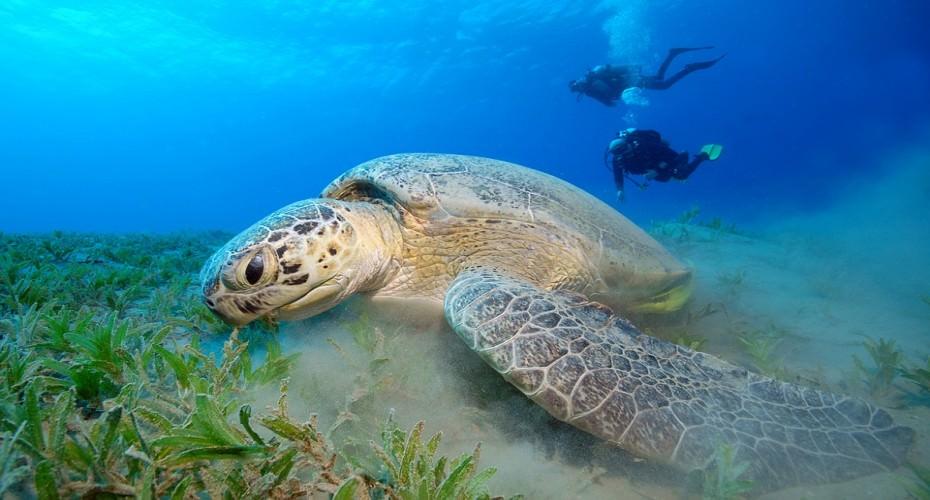 Traveling To Australia- A Scuba Diving Adventure | Atlantis Bali Diving