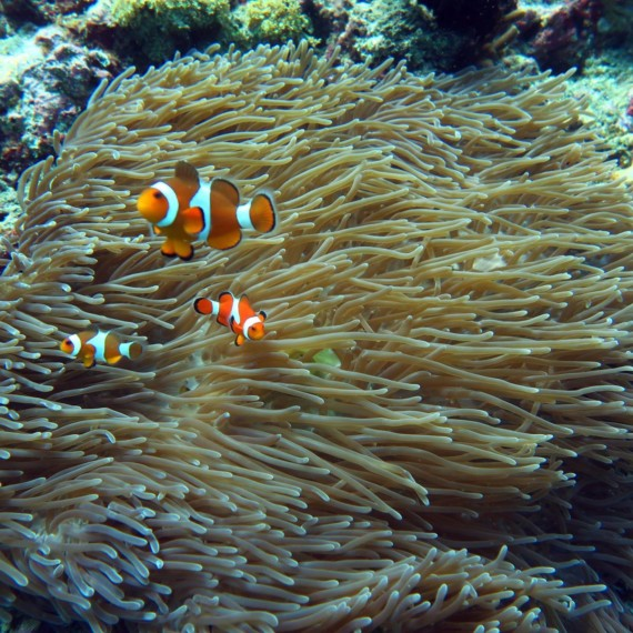 Tulamben - Gilis Safari Diving | Atlantis Bali Diving
