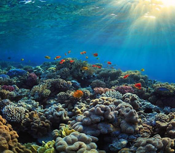 What is Coral | Atlantis Bali Diving