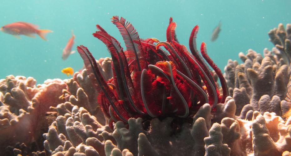 Why Diving In Padang Bay ? | Atlantis Bali Diving