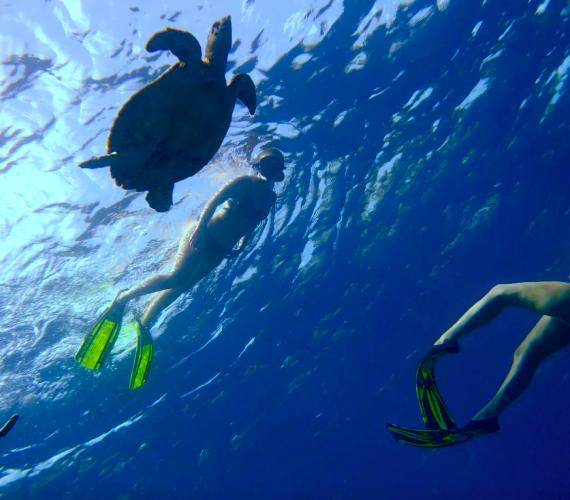 Newsletter December   20% off snorkeling daily trips   Atlantis Bali diving