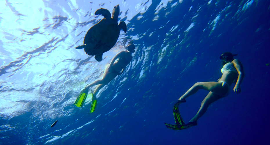 Newsletter December | 20% off snorkeling daily trips | Atlantis Bali diving