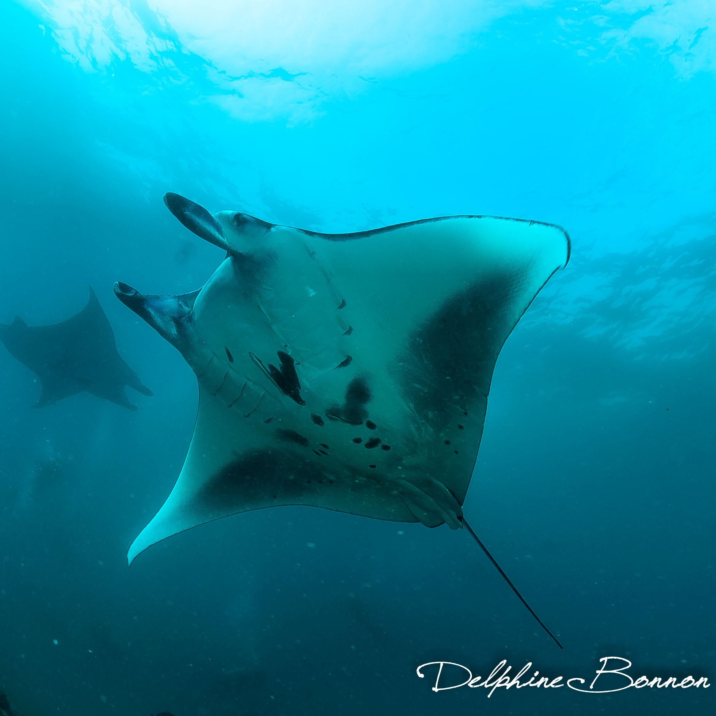 Sunfish Nusa Penida | Atlantis Bali Diving