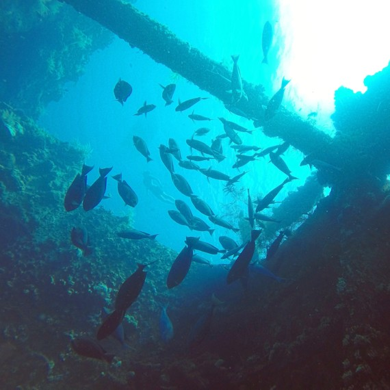wreck diving spot Tulamben Amed | Atlantis Bali Diving