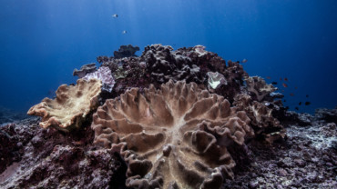 Coral propagation course | Atlantis Bali Diving