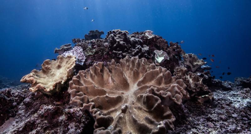 Coral propagation course | Atlantis Bali Diving