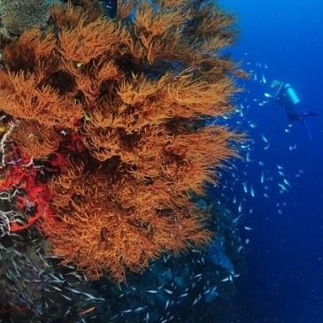 Abyss & Sea Turtles - Menjangan | Atlantis Bali Diving