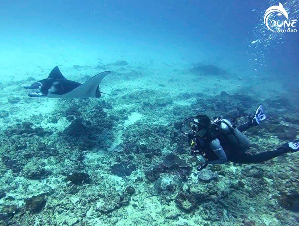 Padi Open Water | Atlantis Bali Diving