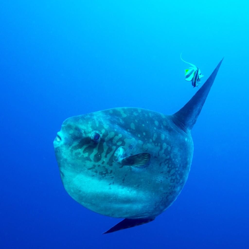 Nusa Penida | Atlantis Bali Diving
