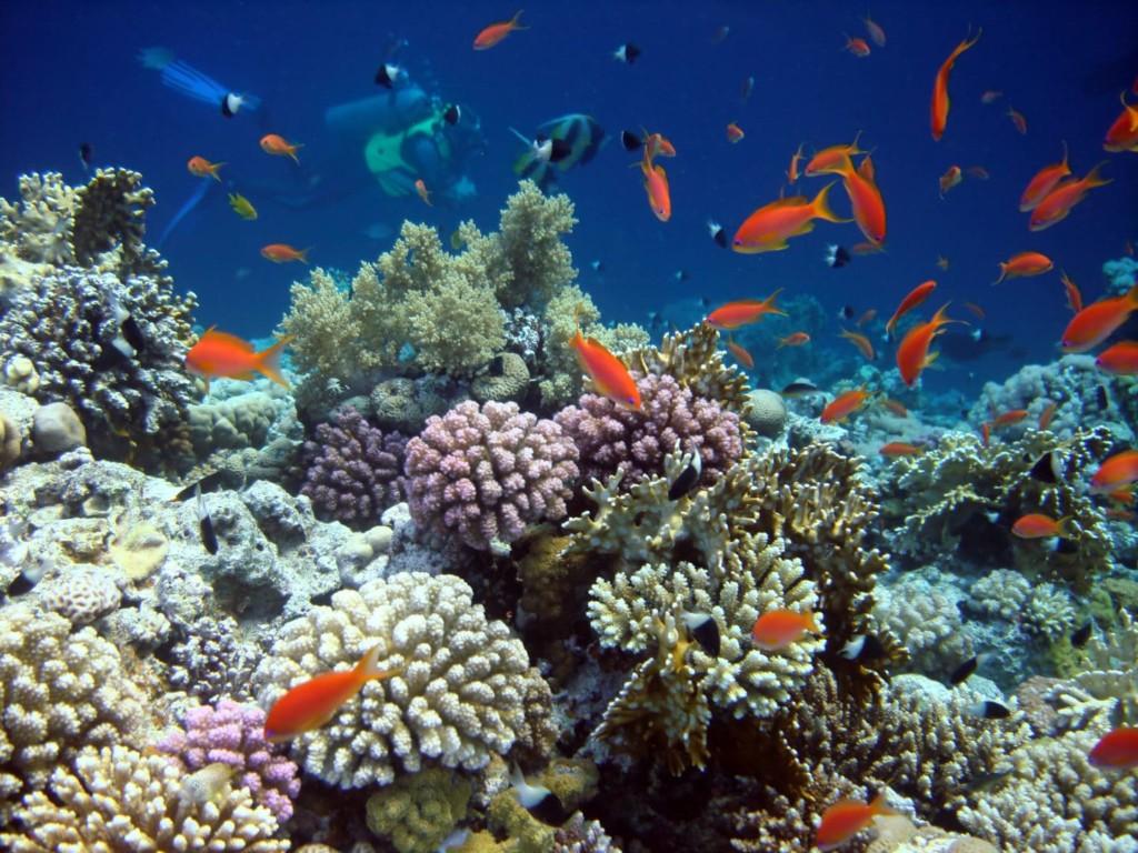 Grâce à Ocean Gardener | Atlantis Bali Diving