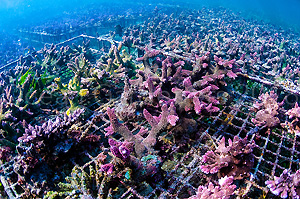 Coral Reef | Atlantis Bali Diving